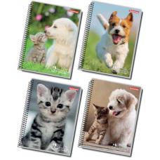 cad univ cd 96fls 1x1 caes gatos